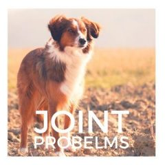 Joint Problems