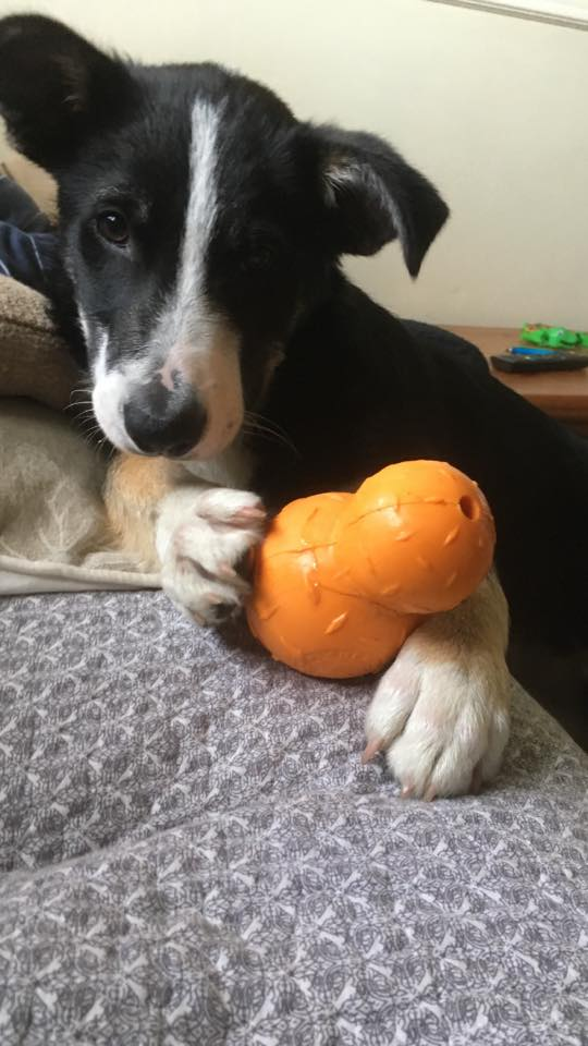 strong dog toy suitable for puppies