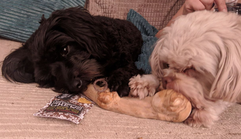 Coffee wood chew large enough for 2 dogs
