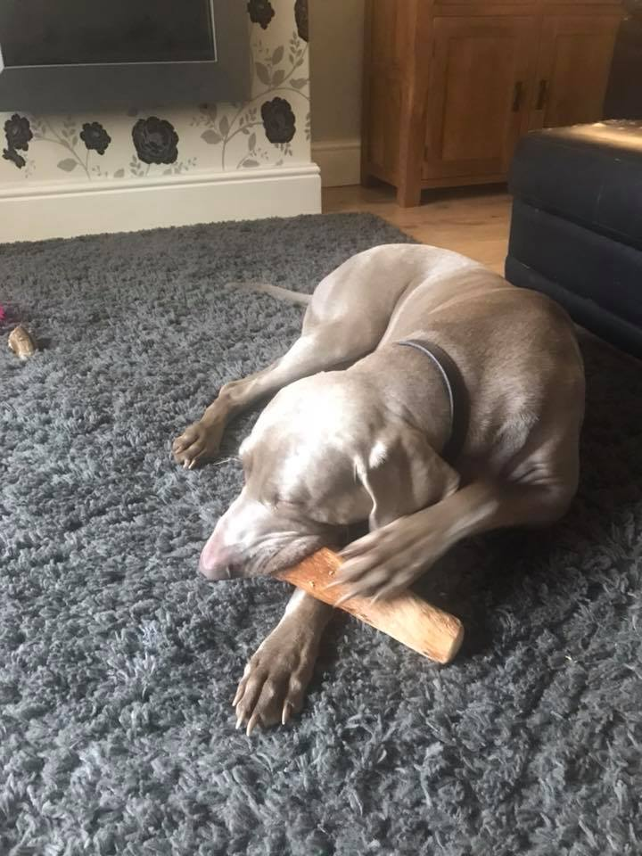 strong natural wood chew for large dogs