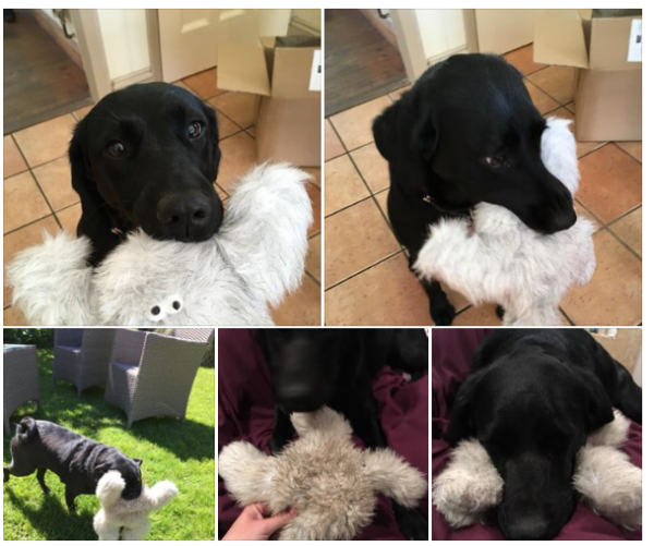 strong soft toy for Labrador's