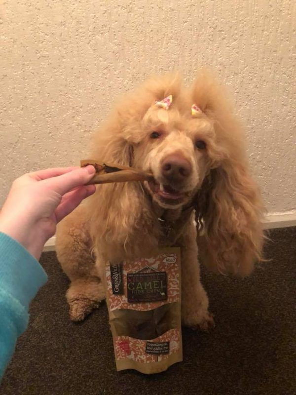 Natural chew treats for a poddle