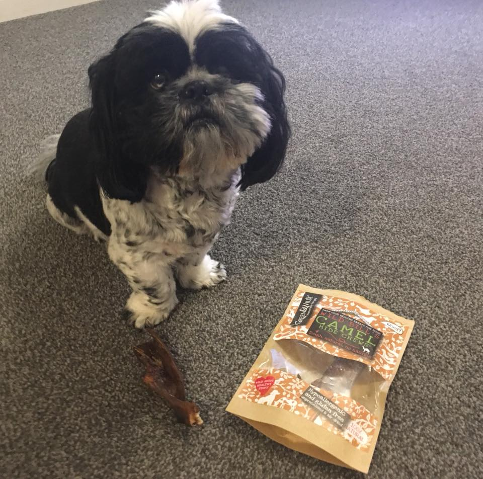 Camel hide chew treats for shih tzu.