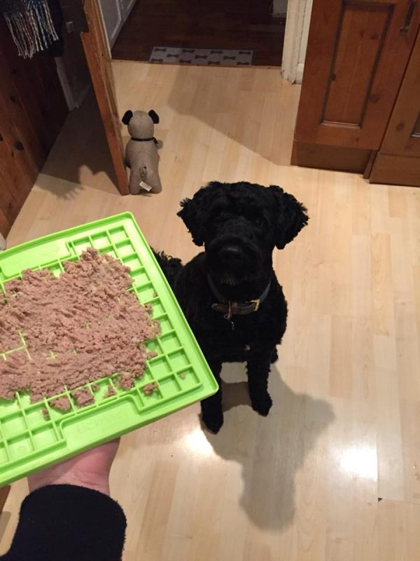 Slow feeding mat for dogs