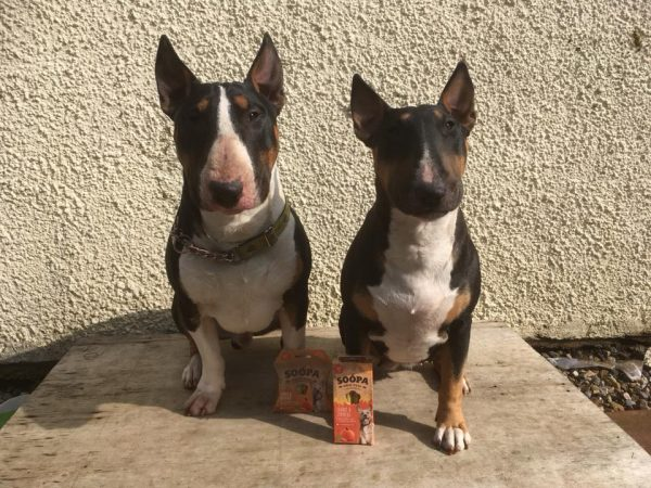 All natural dental sticks for bull terriers
