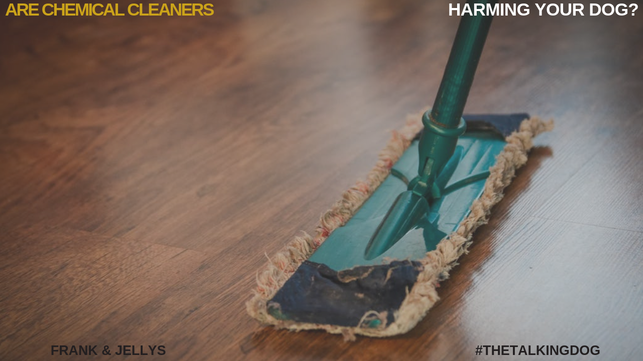 Are you harming your dog with chemical cleaners?