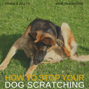 How to stop your dog scratching
