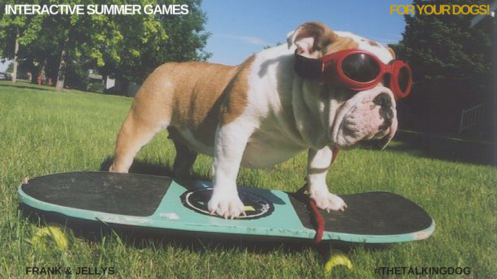 interactive summer games for your dog