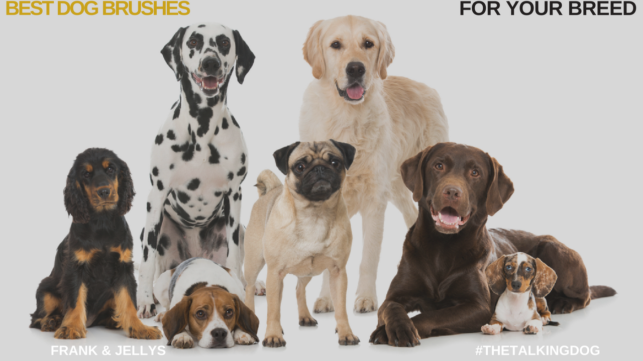 best dog brushes for your breed