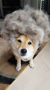 Pet hair reducing bundle