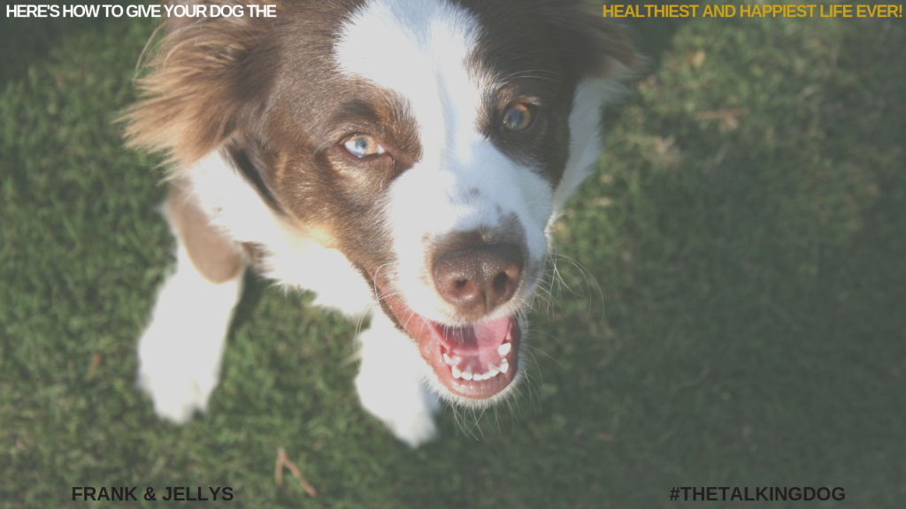 Here's how to give your dog the healthiest and happiest life ever!